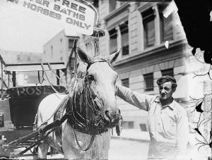 keep your horse fresh